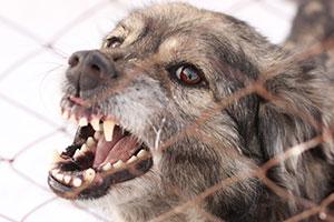 Boston Dog Bite Lawyer