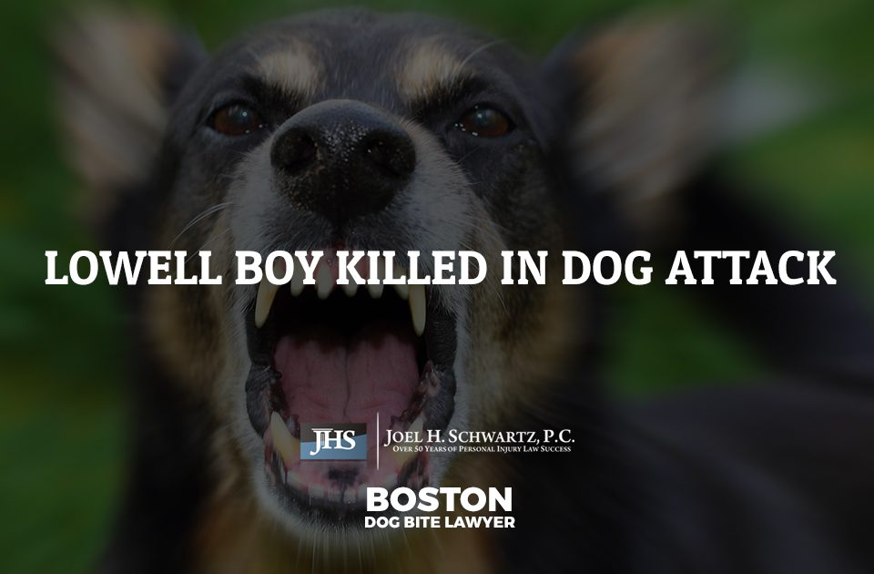 Lowell Boy Killed in Pit Bull Attack